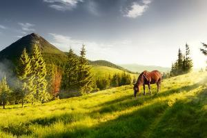H Horse in a Pasture in the Mountain Valley. Landscape Morning Panorama of the Mountains in Summer by Kotenko