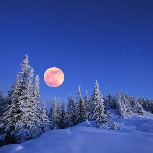 Winter Landscape in the Mountains at Night. A Full Moon and a Starry Sky. Carpathians, Ukraine by Kotenko