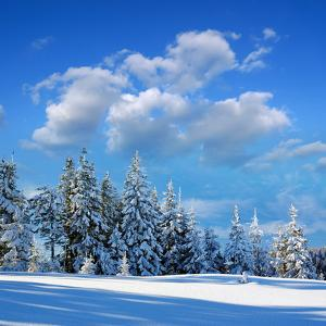 Winter Landscape with Snow in Mountains Carpathians, Ukraine by Kotenko