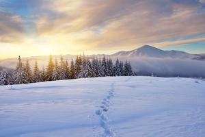 Winter Landscape with Sunrise in the Mountains, Path in the Snow, Carpathians, Ukraine, Europe by Kotenko