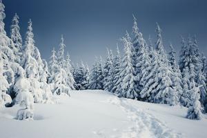 Winter Landscape by Kotenko