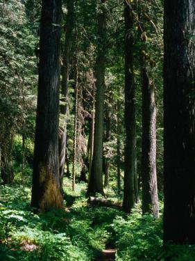 Forest, USA by Kraig Lieb