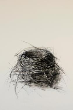 Nest by Kris Ekstrand