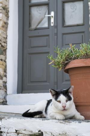 A Local Cat Rests in Front of a Doorway