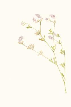 Flourish Poesy by Kristine Hegre