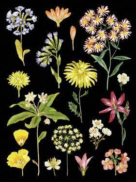 Flower Press by Kristine Hegre