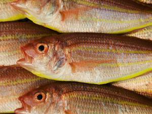 Fish for Sale at Tsukiji Fish Market by Krzysztof Dydynski