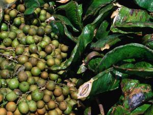 Fruit Cart Selling Mamoncillo and Guama, Bogota, Colombia by Krzysztof Dydynski
