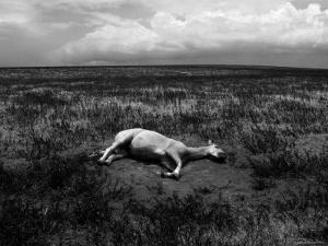 Horse Lying on Side in Field by Krzysztof Rost