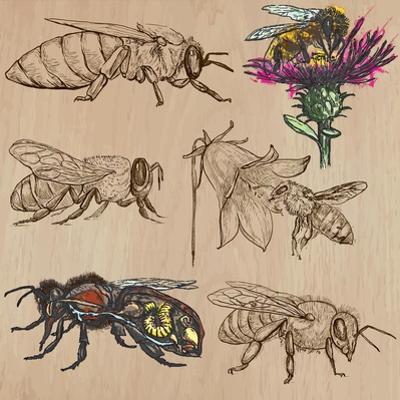 Bees, Beekeeping, and Honey by KUCO