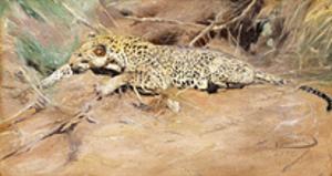 A Leopard by Kuhnert Wilhelm