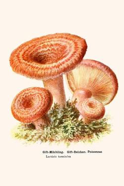 Cat Dressed in Japanese Clothing with an Octopus by Kuniyoshi Utagawa