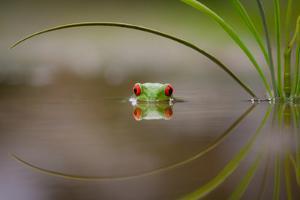 Beauty of Reflection by Kutub Uddin