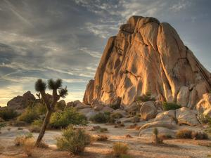 Sunset at Joshua Tree National Park in Southern California by Kyle Hammons
