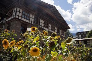 Asia, Bhutan, Thimpu. Sunflowers and Bhutanese Architecture by Kymri Wilt