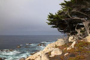 USA, California, Monterey. 17-Mile Drive Coast Near Ghost Tree by Kymri Wilt