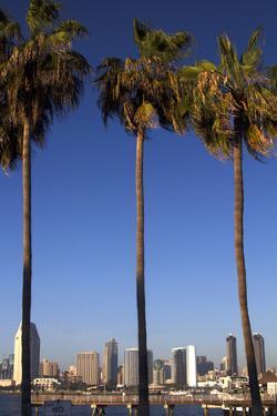 USA, California, San Diego. San Diego Skyline and Palm Trees by Kymri Wilt
