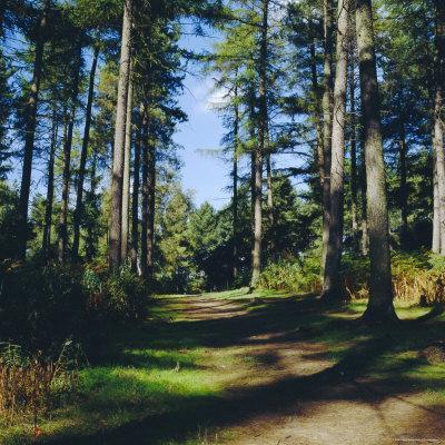 Woodland Walk, Sherwood Forest, Edwinstowe, Nottinghamshire, England