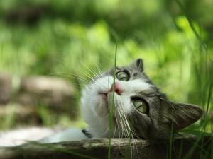 Cat Lying Outdoors In The Grass On A Lovely Summer Day by l i g h t p o e t