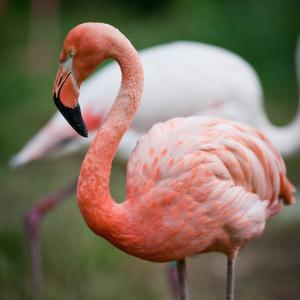 Pink Flamingos by l i g h t p o e t