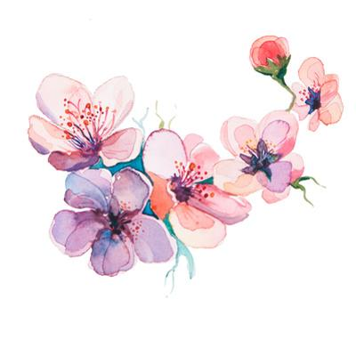 The Spring Flowers Watercolors Isolated on the White Background