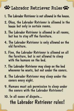 Labrador Retreiver House Rules Humor Plastic Sign
