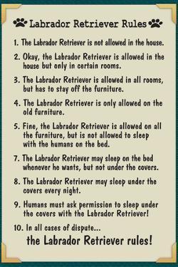 Labrador Retreiver House Rules