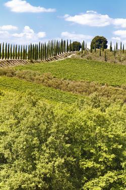 Montalcino by lachris77
