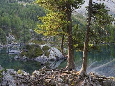 https://imgc.allpostersimages.com/img/posters/lago-di-saoseo-grisons-switzerland_u-L-Q1EXYYL0.jpg?artPerspective=n