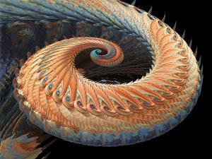 Dragon Tail Fractal by Laguna Design
