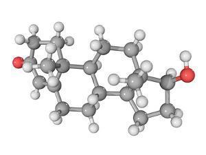 Testosterone Hormone, Molecular Model by Laguna Design