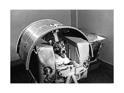https://imgc.allpostersimages.com/img/posters/laika-the-space-dog_u-L-PK0N680.jpg?artPerspective=n