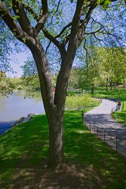 Lake in Central Park in the Spring, New York City, New York