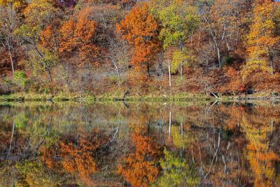 https://imgc.allpostersimages.com/img/posters/lake-jacomo-fall-colors-fleming-park-kansas-city-missouri-usa_u-L-PN6X0W0.jpg?artPerspective=n
