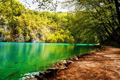 Beaten Track near A Forest Lake in Plitvice Lakes National Park, Croatia