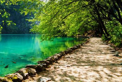 Path near A Forest Lake with Fish in Plitvice Lakes National Park, Croatia by Lamarinx