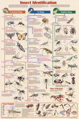 Laminated Insect Identification Educational Science Chart Poster