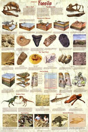 Laminated Introduction to Fossils Paleontology Educational Science Chart Poster