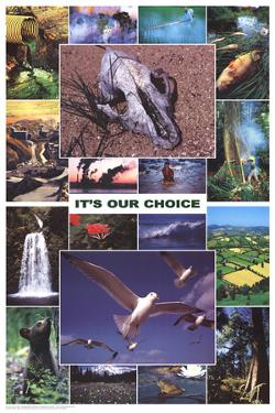 Laminated It's Our Choice Enviornment Educational Science Chart Poster