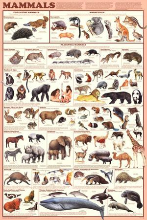 Laminated Mammals Educational Animal Chart Poster