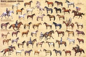 Laminated North American Horses Animal Chart Poster