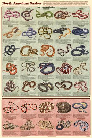 Laminated North American Snakes Educational Science Chart Poster