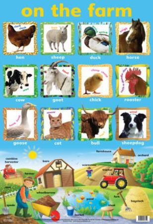 Laminated On The Farm Educational Chart Poster Print