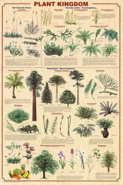 Laminated Plant Kingdom 2 Educational Science Chart Poster