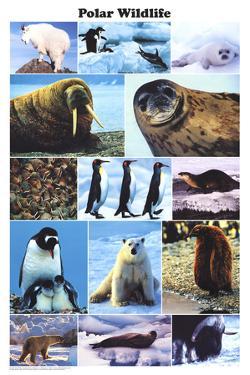 Laminated Polar Wildlife Educational Animal Chart Poster