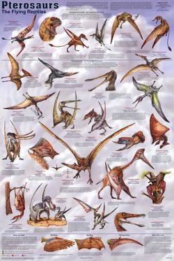 Laminated Pterosaurs Educational Dinosaur Science Chart Poster