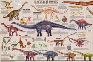 Laminated Sauropods Educational Dinosaur Science Chart Poster