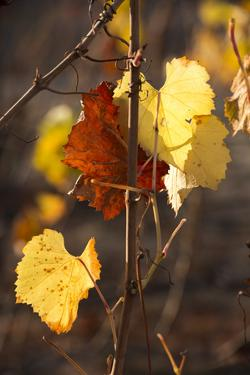 Autumn Leaves by Lance Kuehne
