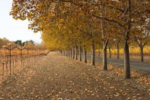Autumn Rows by Lance Kuehne