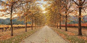 Napa Lane by Lance Kuehne